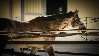 Pferdeklinik Salzhofen - Leistungen - Reha - Führmaschine