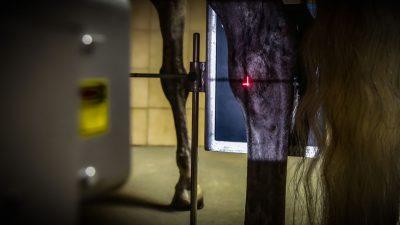 Pferdeklinik Salzhofen - Leistungen - Bildgebung - Röntgen