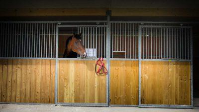 Pferdeklinik Salzhofen - Impressionen - Pferd in Box