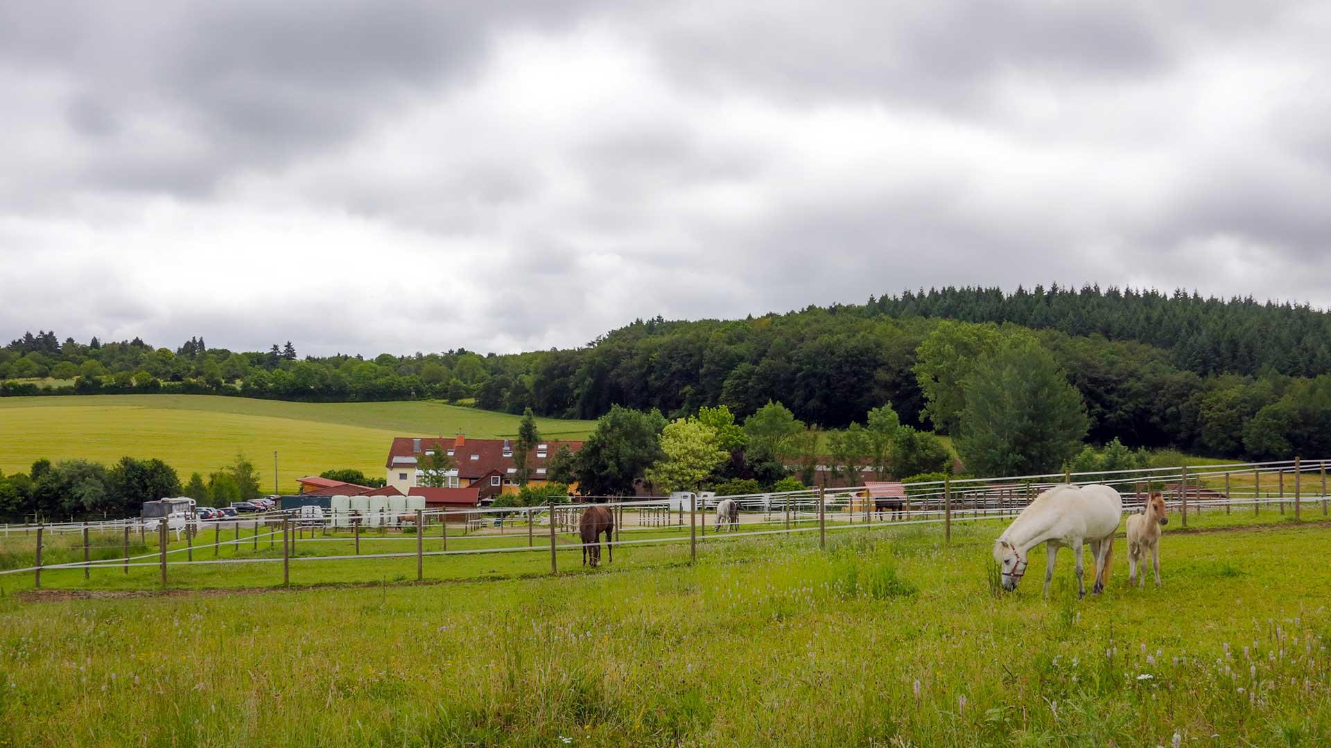 Pferdeklinik Salzhofen - Impressionen - Koppel mit Klinik im Hintergrund