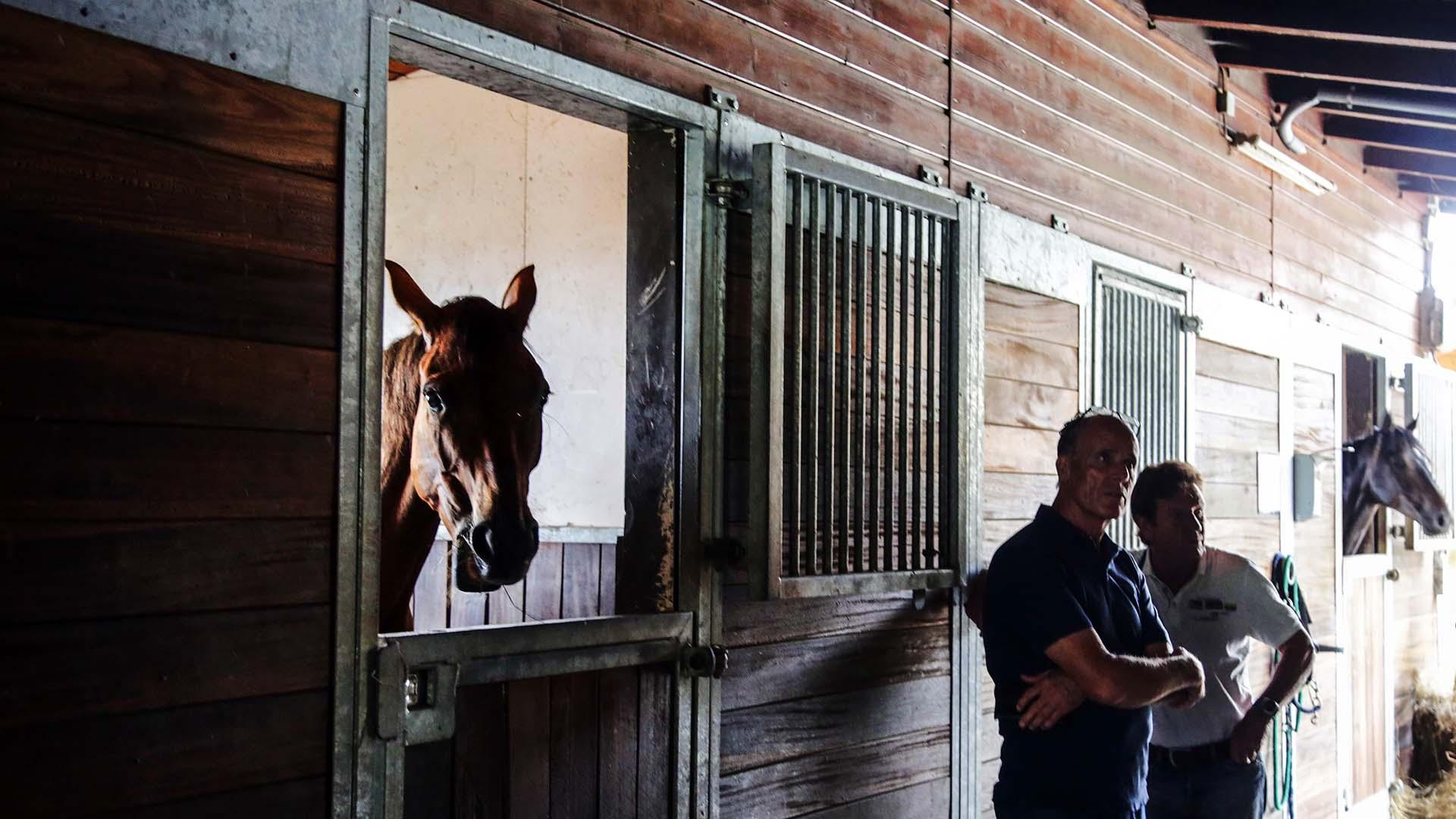 Pferdeklinik Salzhofen - Impressionen - Ärzte bei Arbeit