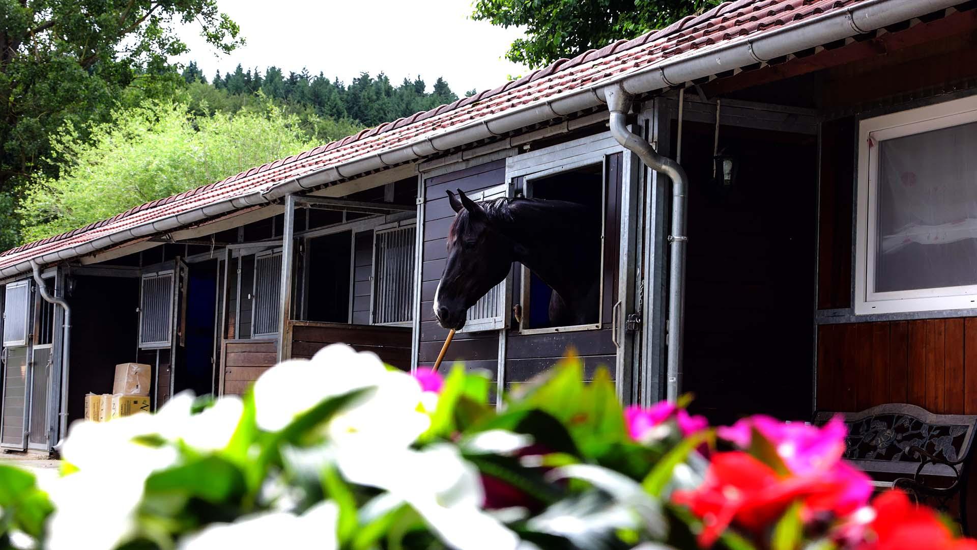Pferdeklinik Salzhofen - Impressionen - Schwarzes Pferd aus Box