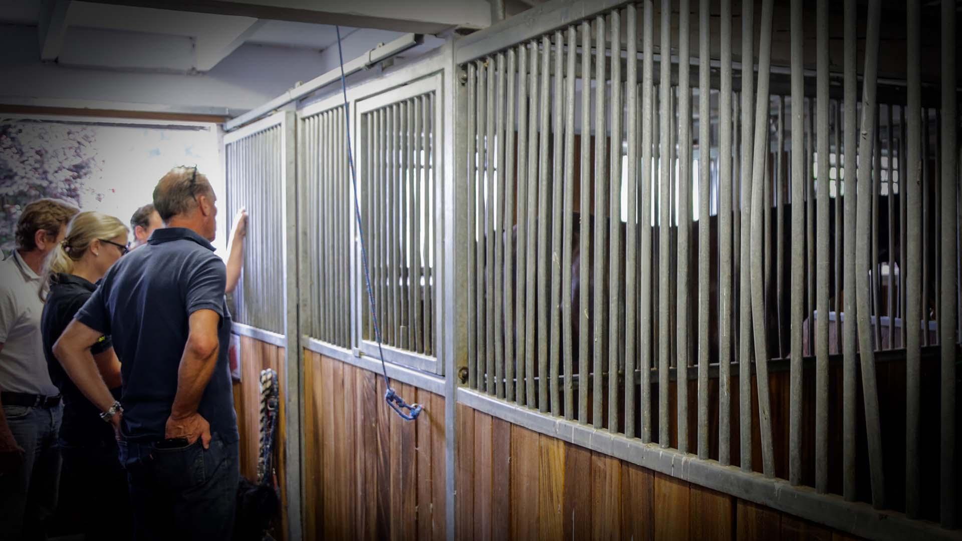 Pferdeklinik Salzhofen - Impressionen - Ärzteteam bei der Arbeit